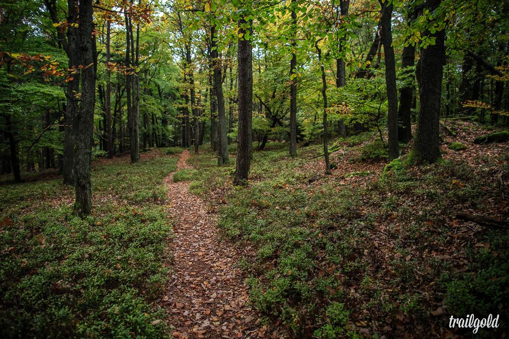 Die typischen Pfalz Trails.